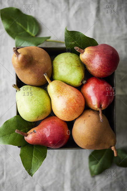 Fresh, ripe pears in a metal tin on a natural linen