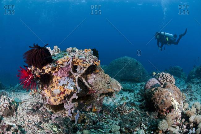 Indonesia- Bali- Nusa Lembonga- Nusa Penida- female diver at coral reef