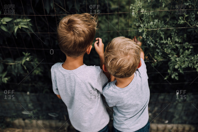 Two boys looking through wire fence