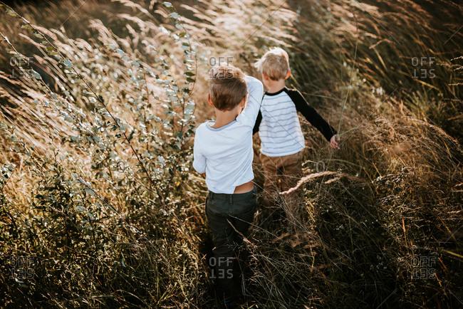 Two boys walking through a field of tall grass