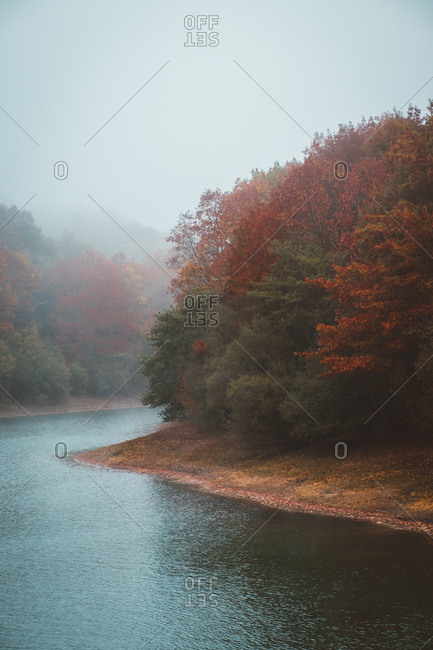 Autumn trees with red leaves at river in foggy day.