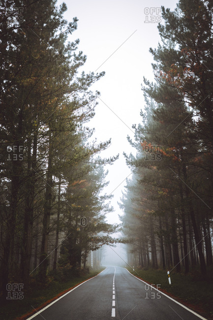 View to asphalt road in green autumn foggy forest.