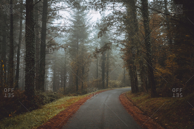 View to asphalt road in beautiful autumn forest in foggy day.