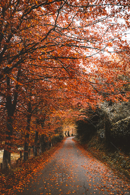 Asphalt road in red forest