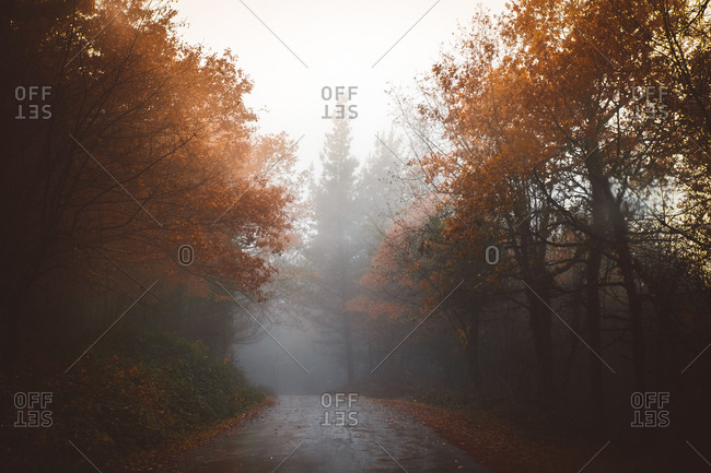 View to asphalt road in foggy autumn scenery forest.