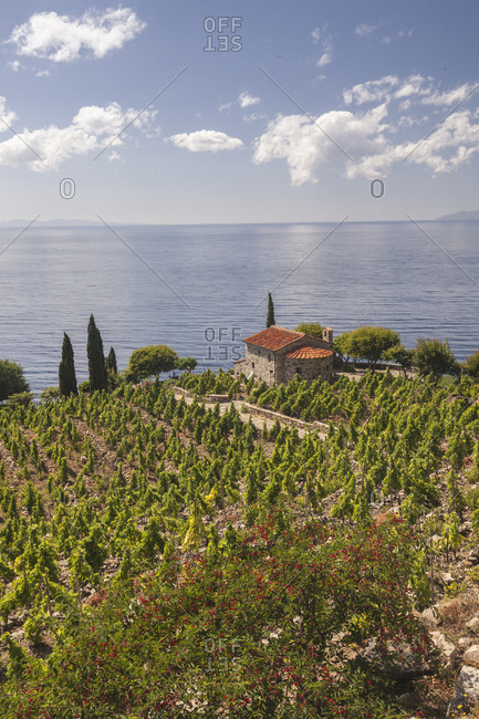 Farmhouse and cultivated fields overlooking the sea, Pomonte, Marciana, Elba Island, Livorno Province, Tuscany, Italy, Europe