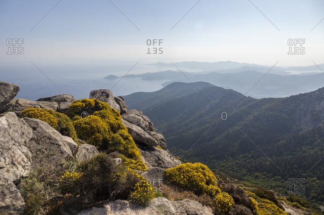 Wild flowers on rocks, Monte Capanne, Elba Island, Livorno Province, Tuscany, Italy, Europe