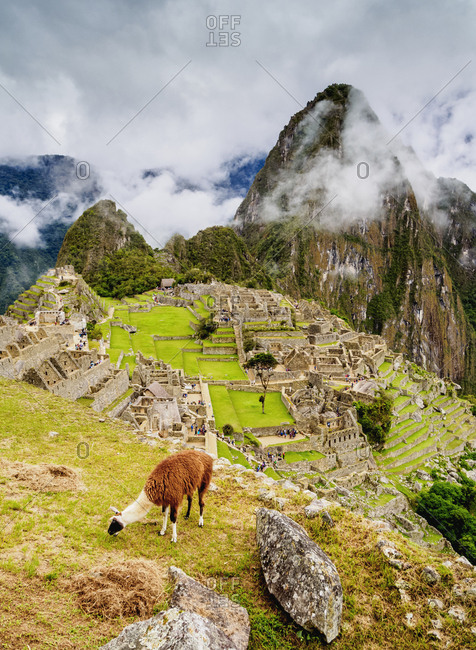 Llama in Machu Picchu, UNESCO World Heritage Site, Cusco Region, Peru, South America