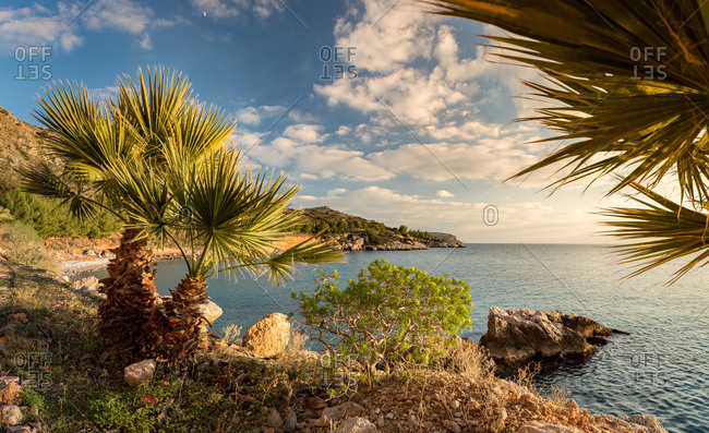 Panorama of Palms on a Rocky Beach on the Aegean Sea in the Peloponnese at Sunset