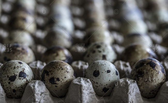 Looking down neat rows of quail eggs in carton at market