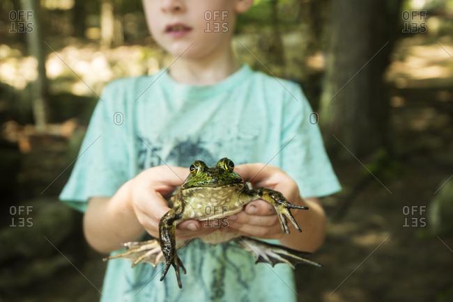 Boy holding a bullfrog