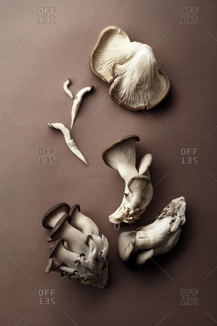 Oyster mushrooms on brown background. Natural lighting. Monochromatic concept