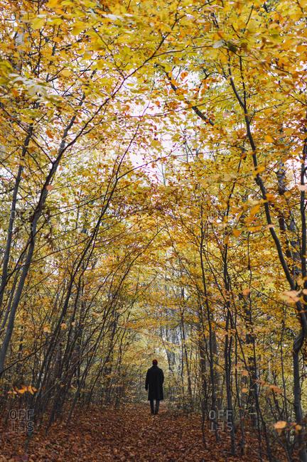 Man posing in autumnal wood