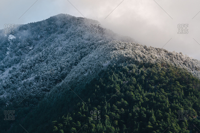 View to green forest and mountain covered with snow