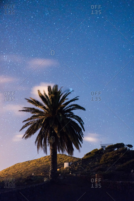 Palm and starry sky