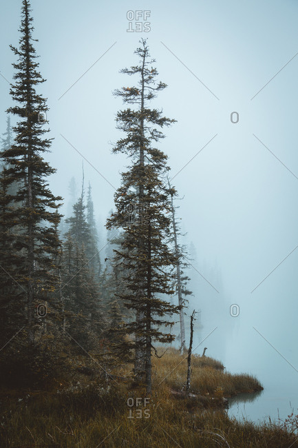 Trees on rocky slope