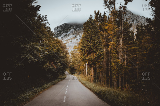 Landscape of road running away in woods