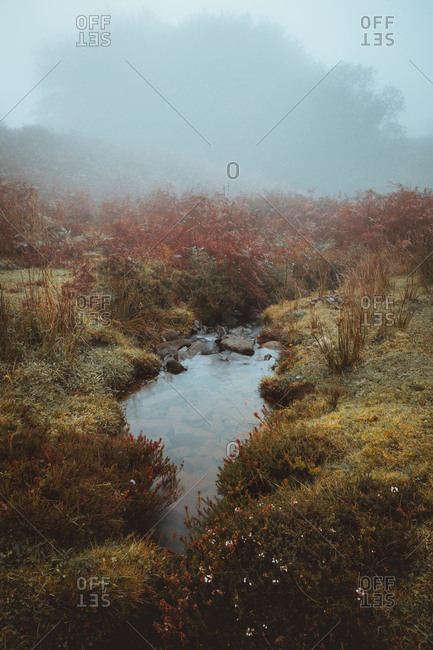 Tranquil water of creek in early morning time with spooky fog covering autumnal grass of ground