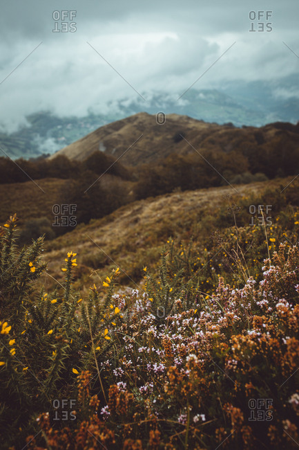 Beautiful wildflowers growing on field with background of spooky mountains in gloomy day