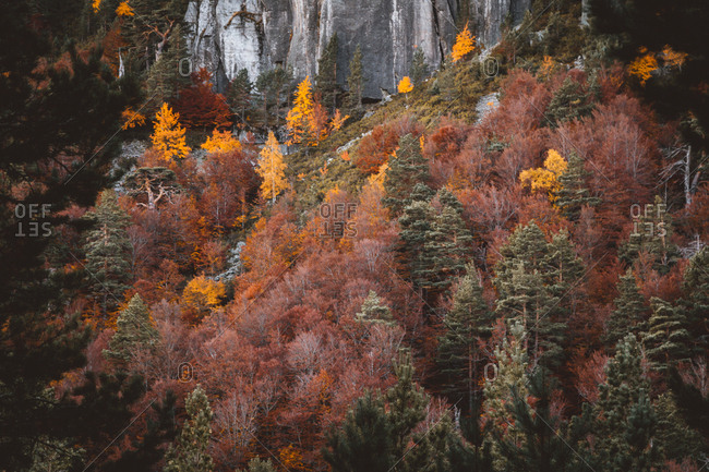 Landscape of trees with vivid fall foliage growing on slope of rocky cliff