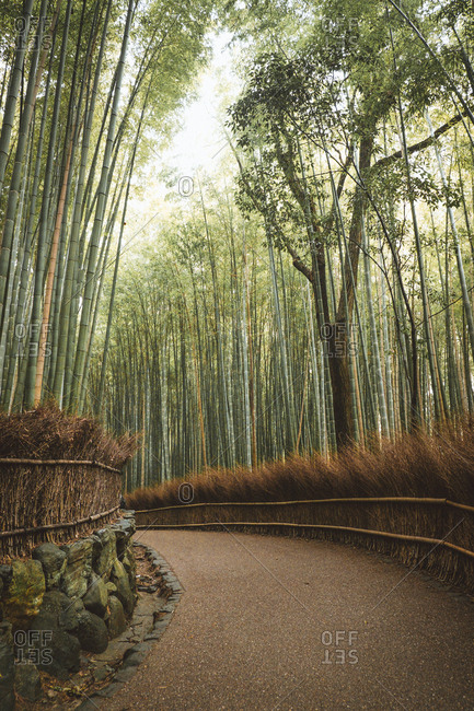 Landscape of curvy pathway running among tranquil bamboo trees in woods