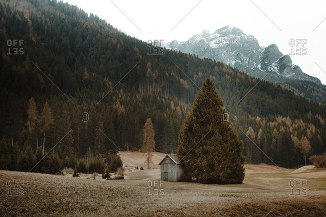 Landscape of small cabin on rural field among evergreen trees with mountains on background