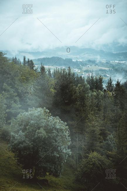 View of coniferous trees with view of mountains on background in flying fog