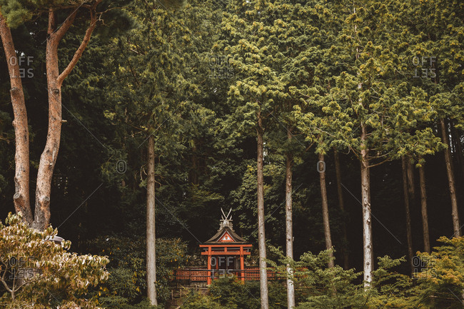 View to small traditional Asian building placed in green thick forest