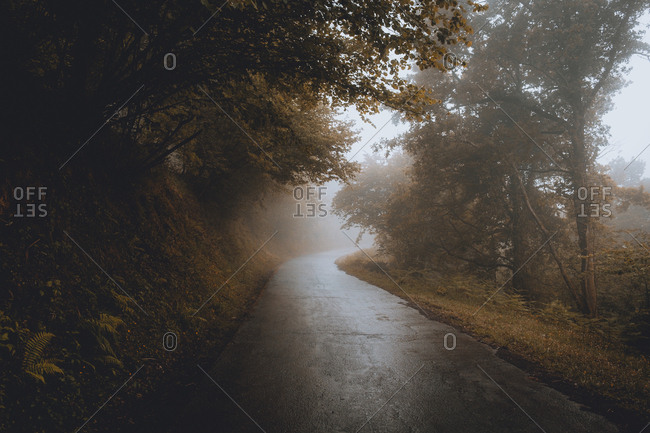 Road in foggy woods