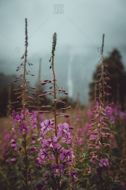 Small purple flowers blooming on autumn field in nature