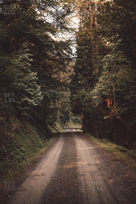 Perspective view to rural road in beautiful calm green forest