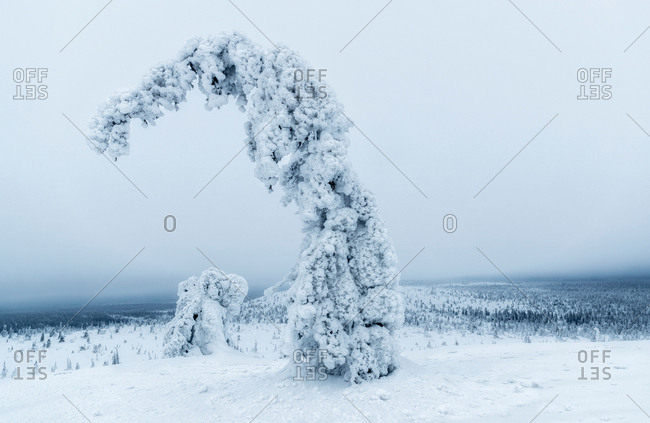View to bent tree with branches covered with snow in winter field
