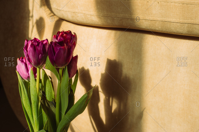Purple tulip arrangement in sunlight