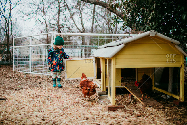 Girl waiting for pet chicken to enter coop