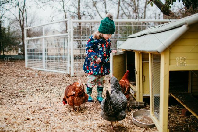 Young girl holding coop door open for chickens