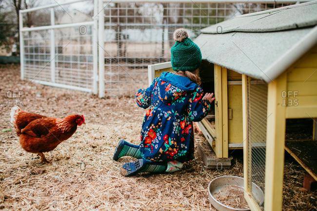 Little girl checking inside chicken coop door