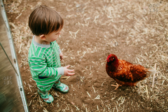 Toddler and chicken staring at each other