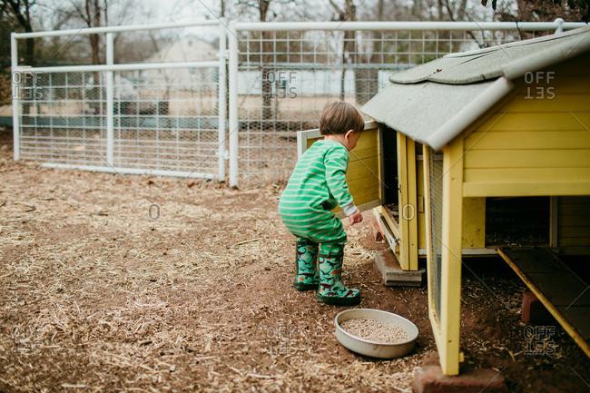 Small boy looking inside chicken coop door