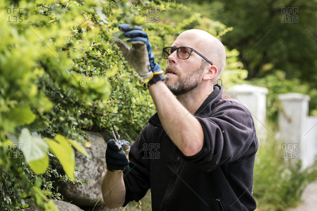 Man cutting plants in garden