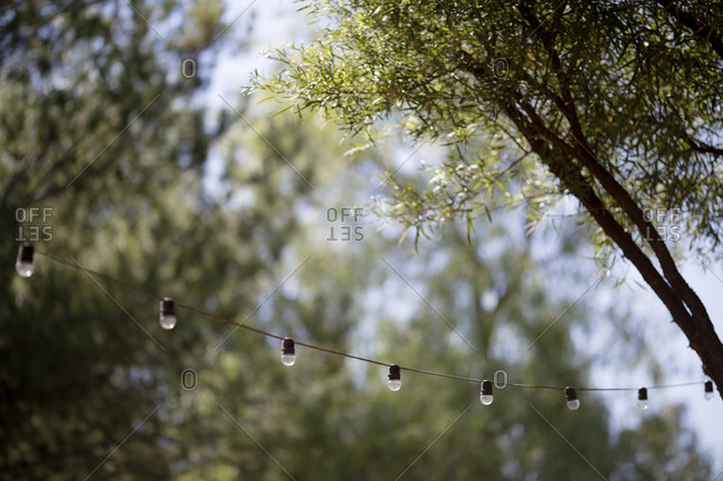 Lighting equipment hanging against branches during wedding ceremony