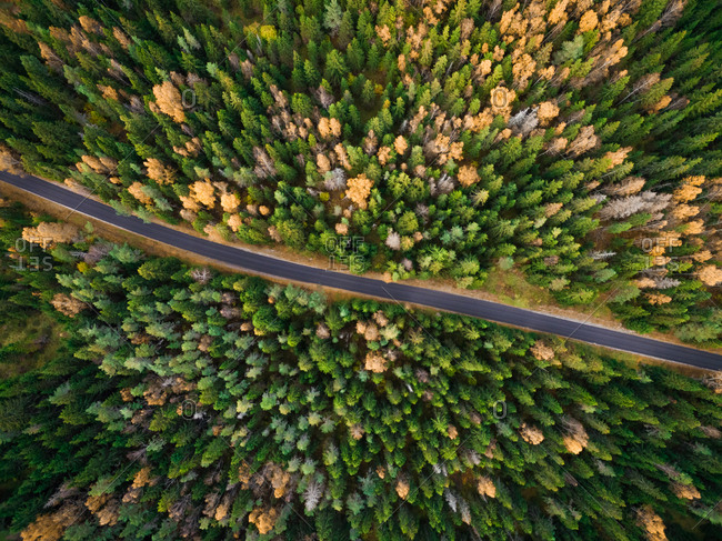 Aerial view of a straight road surrounded by forest during fall season in Estonia.