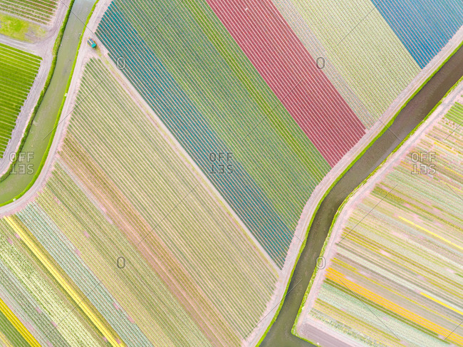 Aerial photography of  colorful tulips fields in Voorhout, Zuid-holland, the Netherlands.