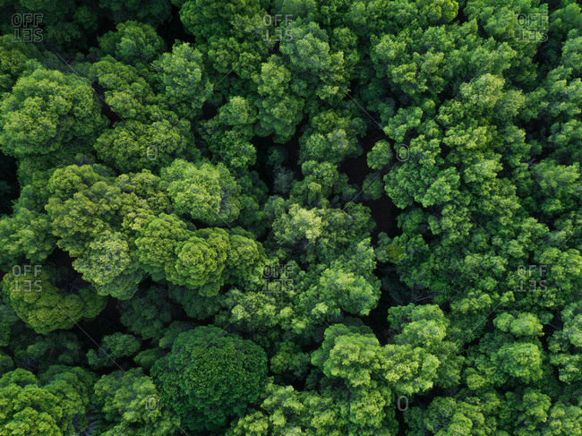 Aerial photography of a forest in Greece
