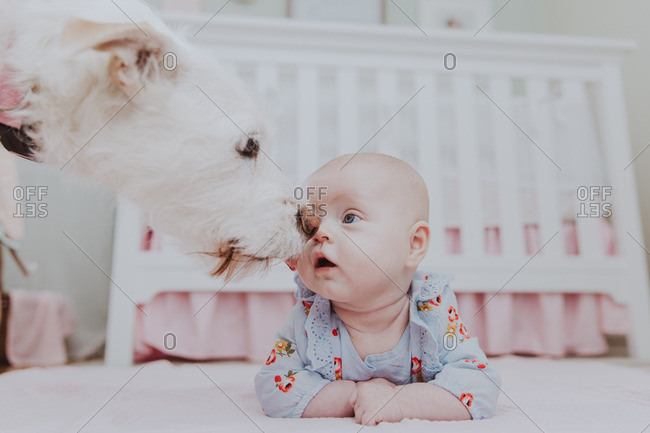 Baby girl and pet dog check each other out in nursery