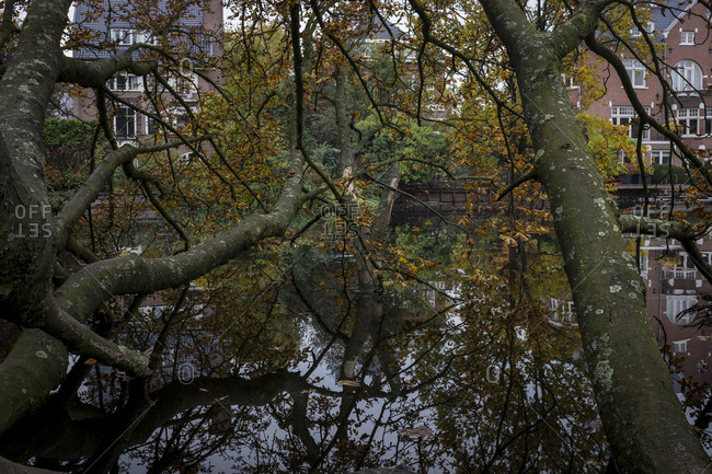 Trees growing to the canal at Vondelpark in Amsterdam, Netherlands