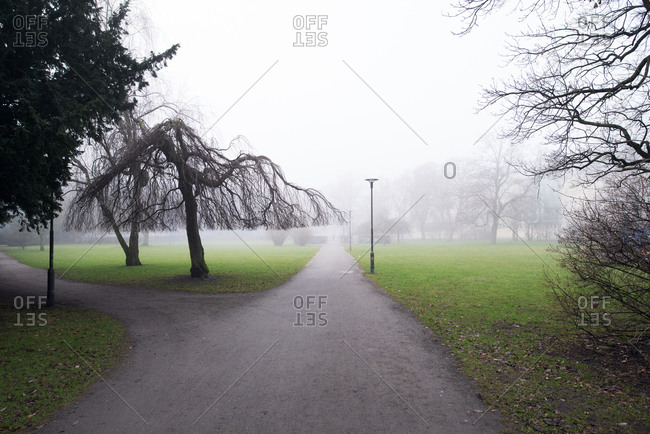 Fork in the path in fog shrouded park