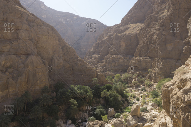 Canyon and palm groves in Oman's Sharqiya region