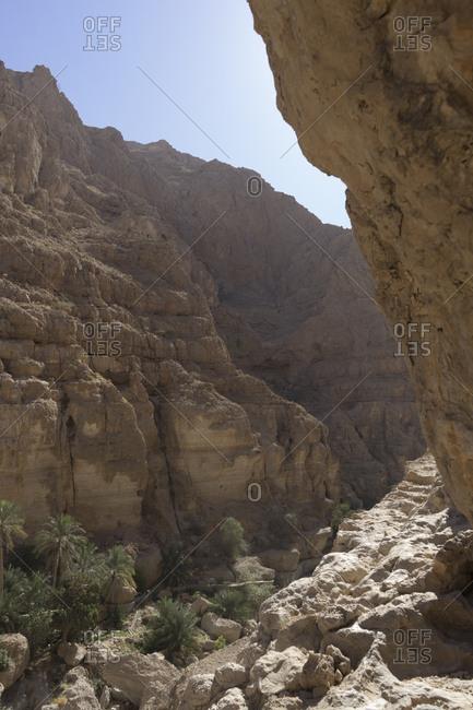 Narrow canyon and palm groves in Oman's Sharqiya region