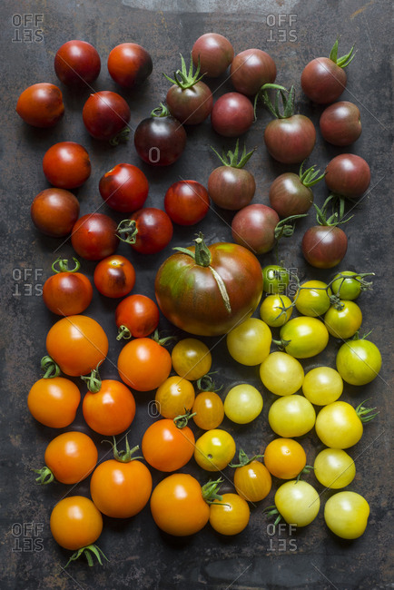 A variety of tomatoes arranged by color on a metal surface.