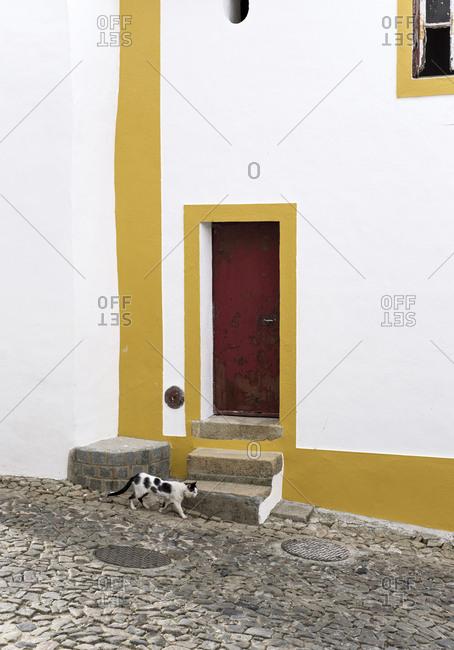 A stray cat in the Jewish Quarter in Castelo de Vide, Portugal, on April 26, 2017. Castelo de Vide is a small medieval town in the Portalegre district and Alentejo region of Portugal.